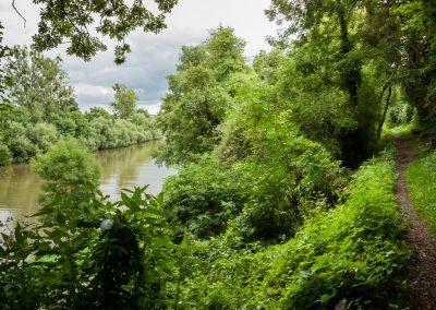 Neckar bei Bad Wimpfen